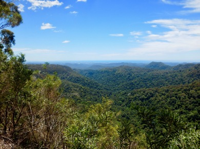 Springbrook National Park, NSW, Australia
