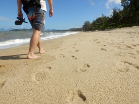 Palm Cove Beach Walks